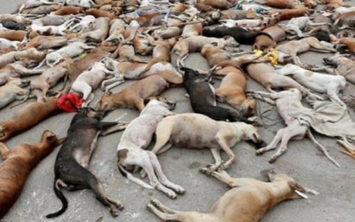 Мертвые собаки