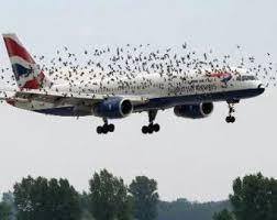 птицы против самолетов-1