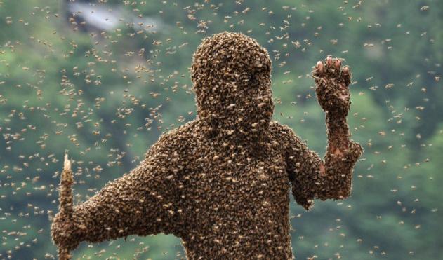 пчелы-2
