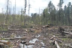 лесные дела-1